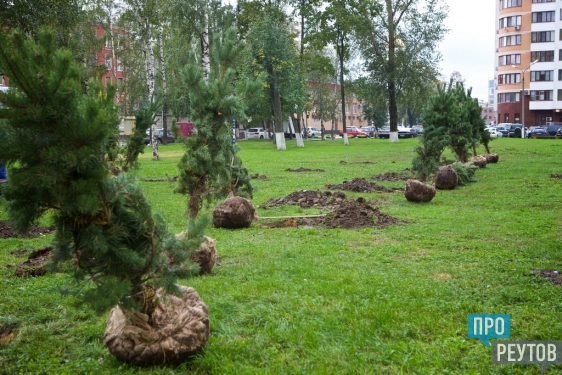 Гимназический парк посадили в Реутове. 17 сентября город присоединился к региональной акции «Наш лес. Посади своё дерево». ПроРеутов
