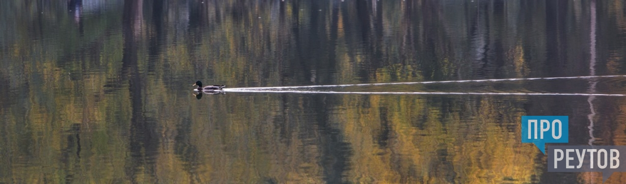 Школа мастерства Ранета Матказина. Отправной точкой для разговора с фотографом газеты «ПроРеутов» стали сотни снимков из разных городов и стран. ПроРеутов