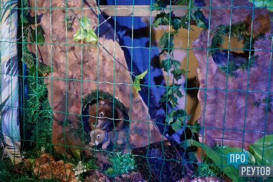 Уникальный зоопарк открылся в кукольном театре в Реутове. Все питомцы абсолютно безопасны для посетителей и не страдают от заточения и ненадлежащего ухода. ПроРеутов