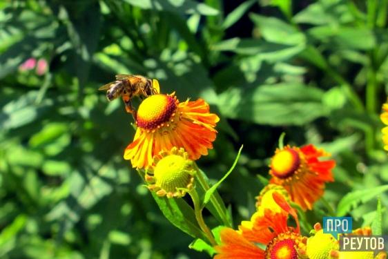 Защитники пчёл замахнулись на мировой рекорд