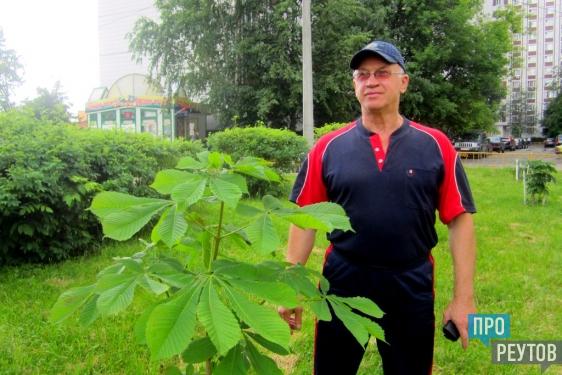 Александр Карпухин высадил в Реутове каштановую аллею/ Это дерево спасло реутовчанина и его боевых товарищей от смерти на Северном Кавказе. ПроРеутов